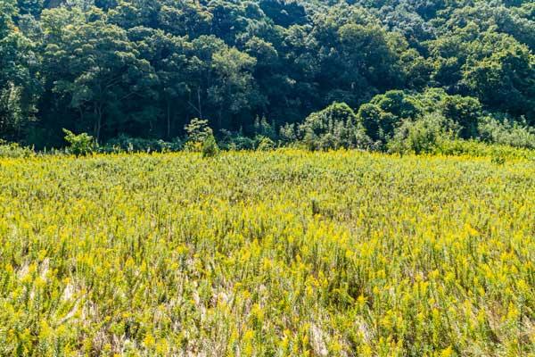 田舎の土地を売りたい人必見!売却成功への8つのコツを解説